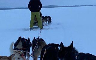 Navigate North 2020 | Dag 3 Sledehonden
